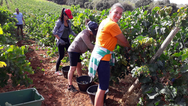 A group of women picking grapes near Ronda