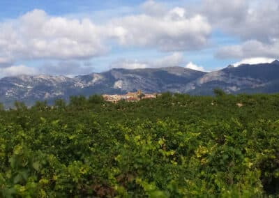 A view of the town of Laguardia with a vineyard in the foreground and mountains in the background during our customised tours