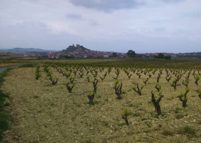 A vineyard with the town of Briones, La Rioja in the background