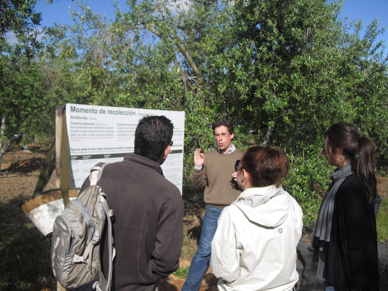 A group visiting an oilve grove during our olive oil tour