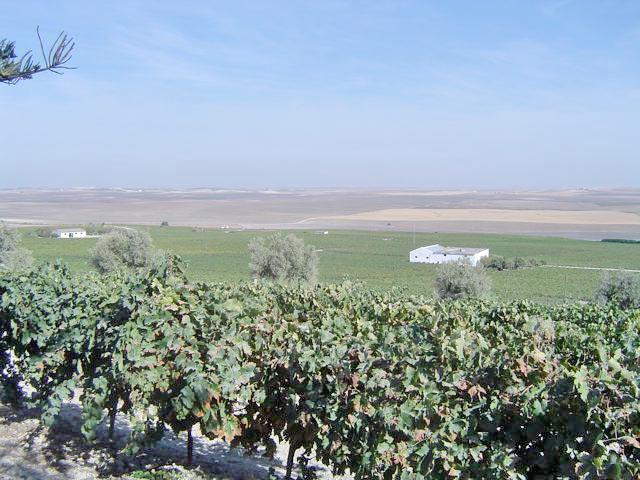 Views on the sherry tour in Sanlúcar de Barrameda