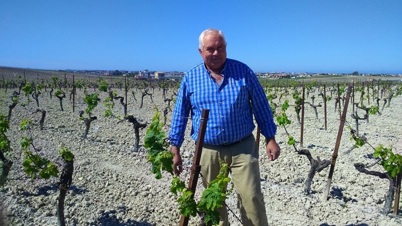 Man standing in vineyard with twon in the background
