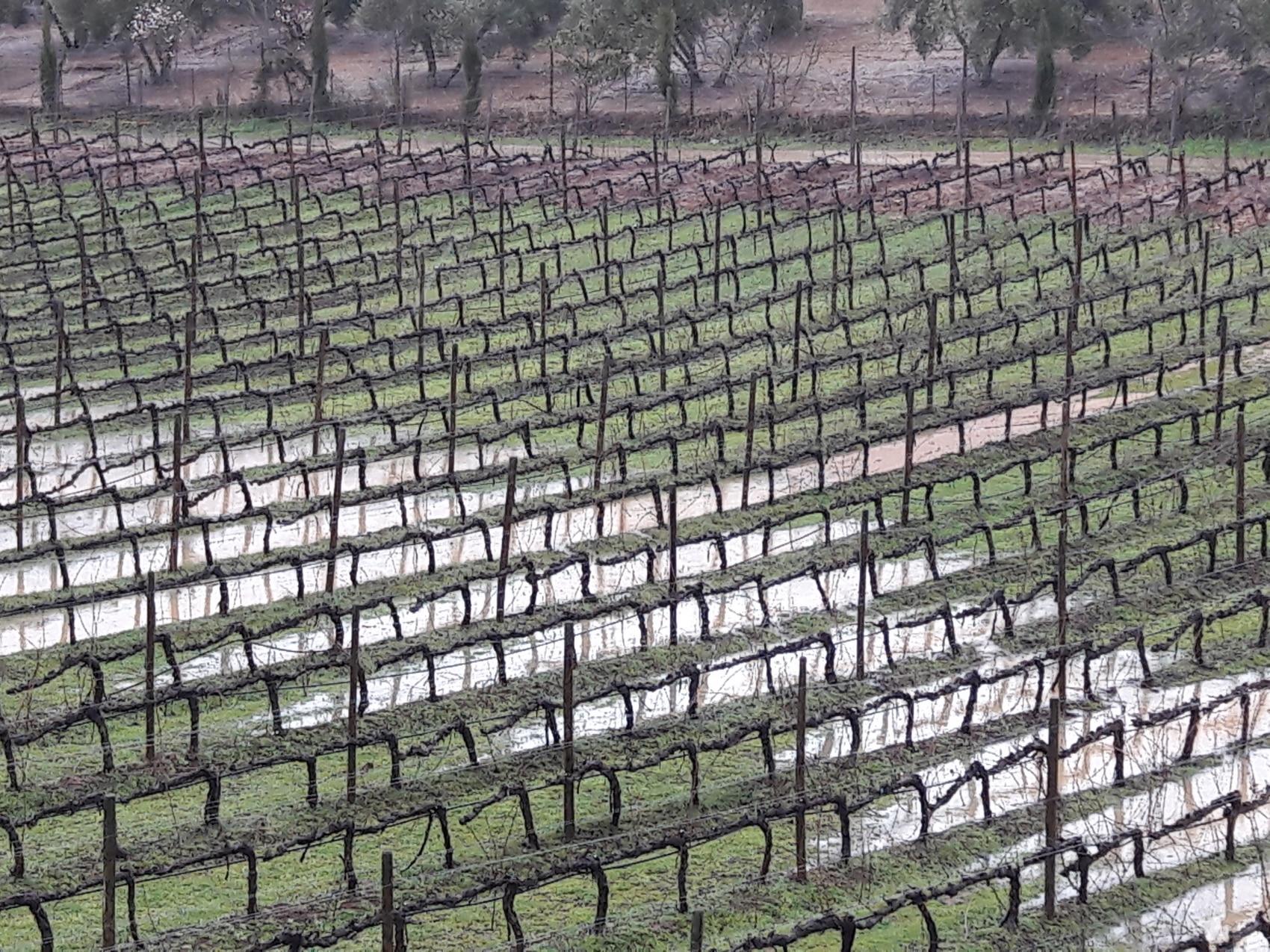vineyard Ronda Spain